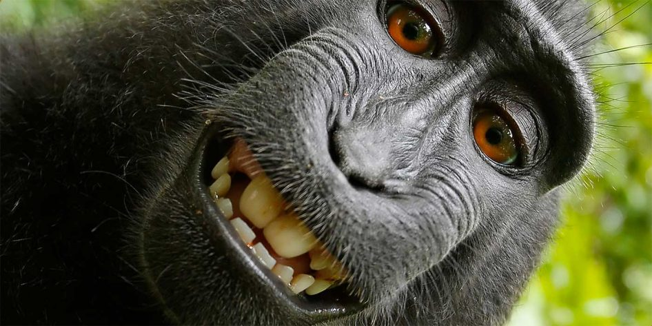 Photo of a monkey smiling