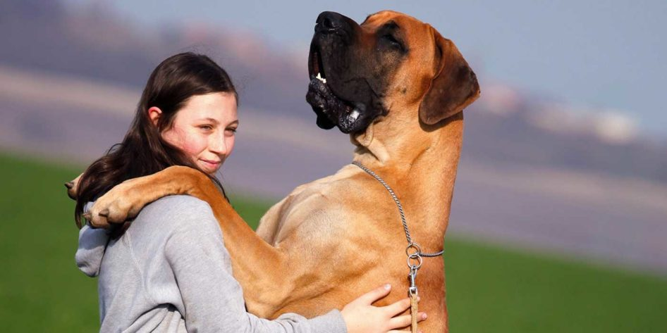 Photo of a Great Dane hugging a woman