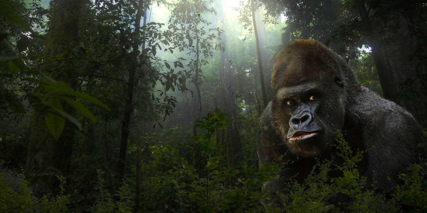 Photo of a gorilla in the jungle