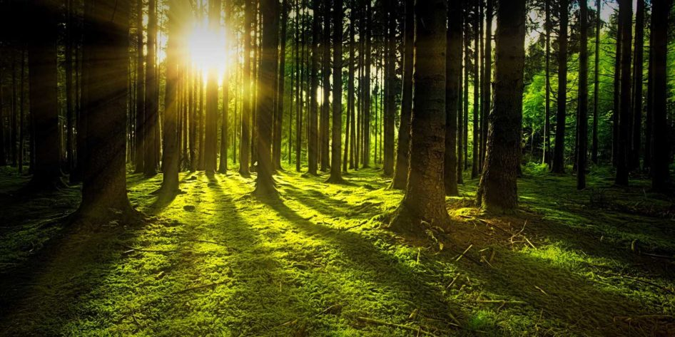Photo of sunlight shining though trees in a forest