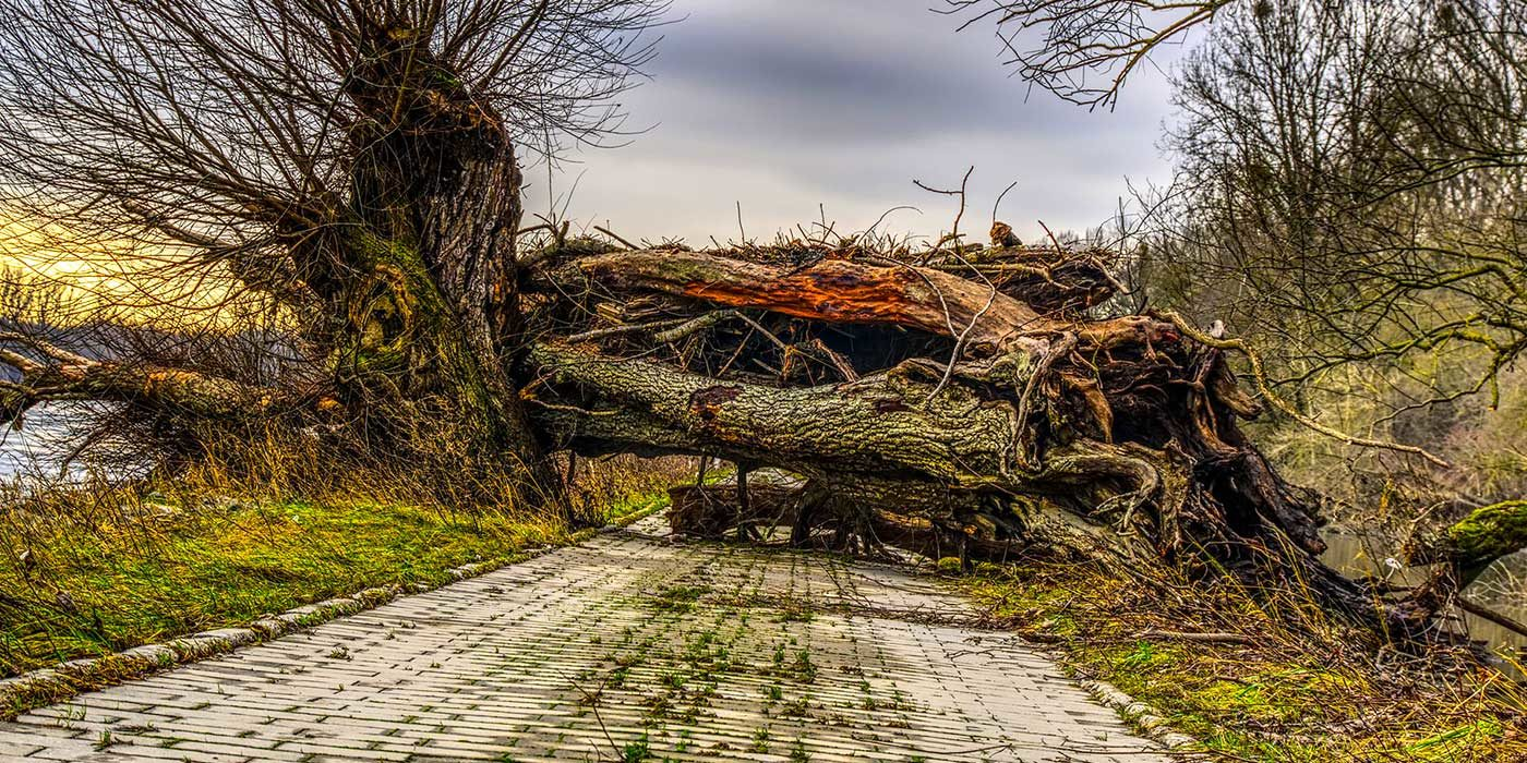 Photo of a fallen tree on a road